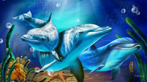 Dolphins one
